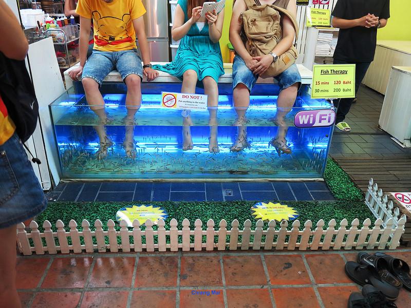 135 Chiang Mai Day 3