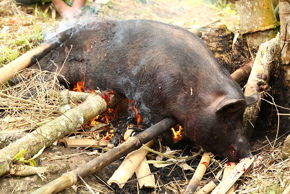 Fire from straws is used to remove the pig's hair.