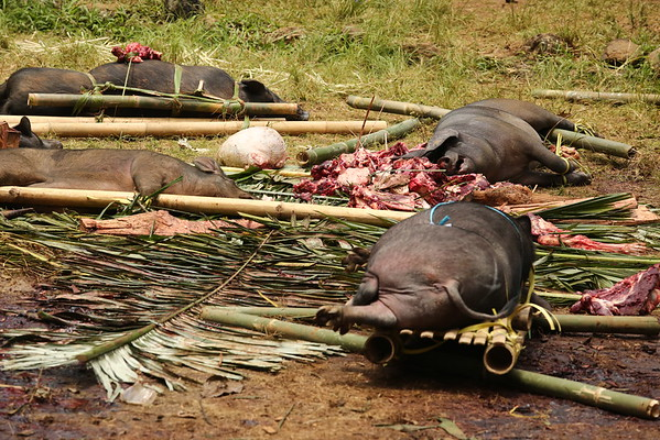 All of them were still alive and one trying to reach the meat from previously killed animals.