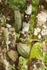 Cocoa plant.