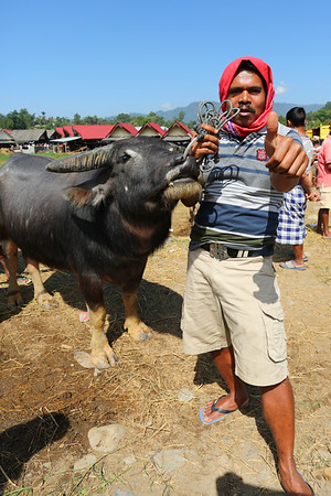 Some of them are asking to have their picture taken along with the buffalo.