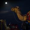 Camel dragon breath.
