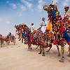 Fancy camel lineup.