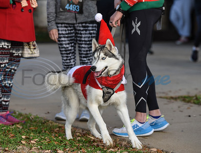 Feliks, a 2 year old Husky, was dressed to impress at the 3rd annual Jacksonville Jingle Jog 5K and Fun Run. The family-oriented event, sponsored by CHRISTUS, was open to runners, walkers, adults and children. (Jessica T. Payne/Tyler Morning Telegraph)