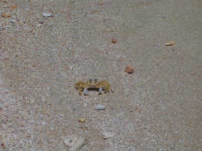 Beach Crab. Kept us entertained watching their antics.