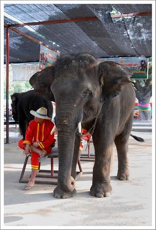 One of the elephants taking a break
