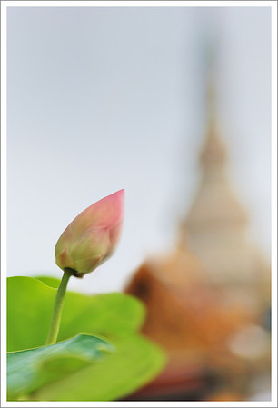 A lotus blossom with The Grand Palace in the background.