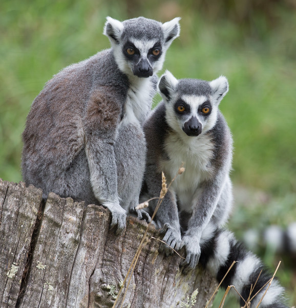 Durrell Wildlife Park, Jersey