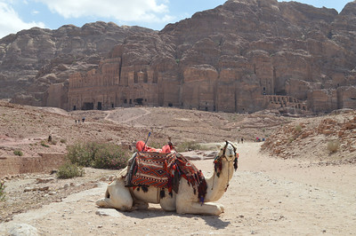 0344_Petra_Camel_Royal Tombs
