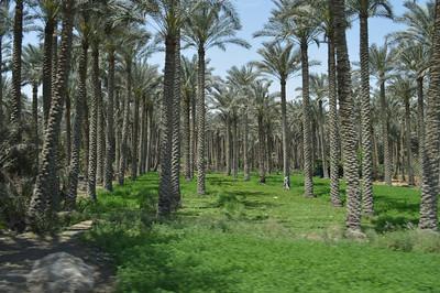 20358_Green Egypt