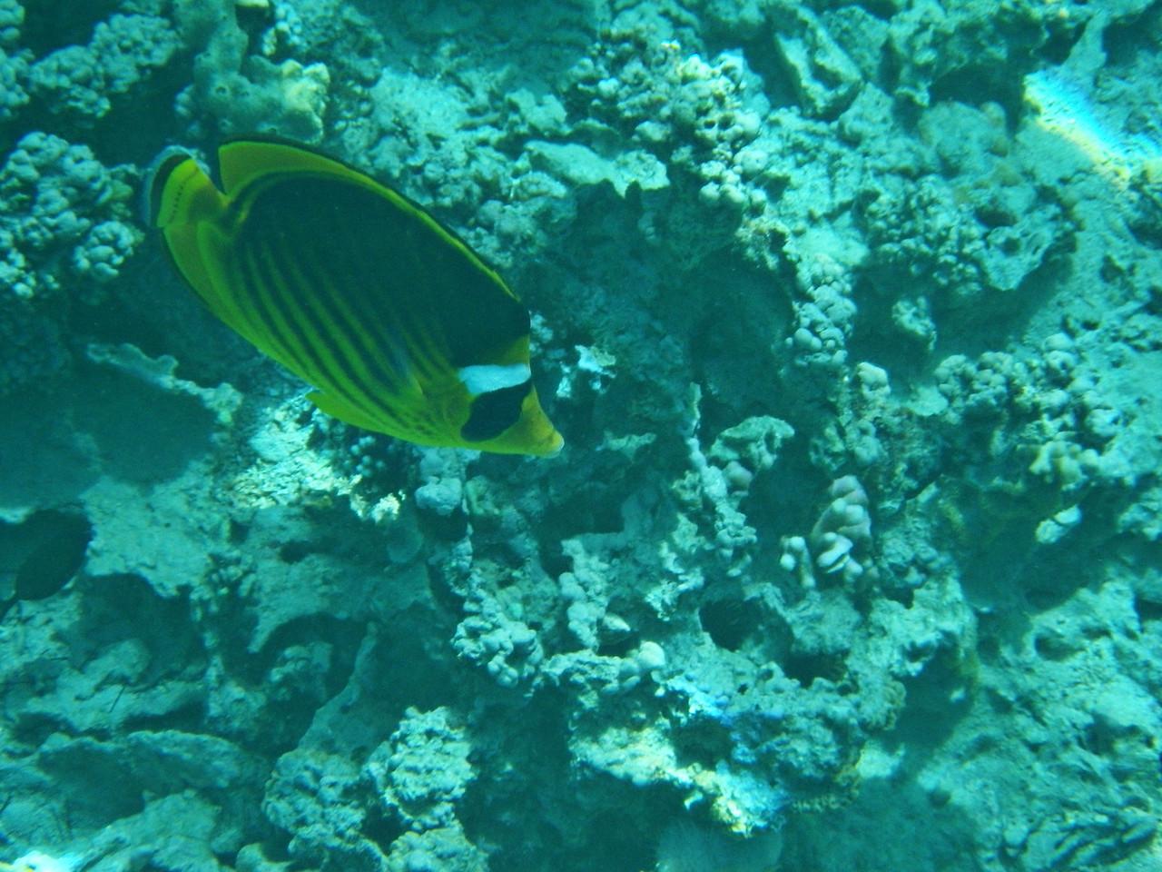 Snorkling i Röda havet
