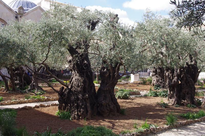 Getsemane trädgård