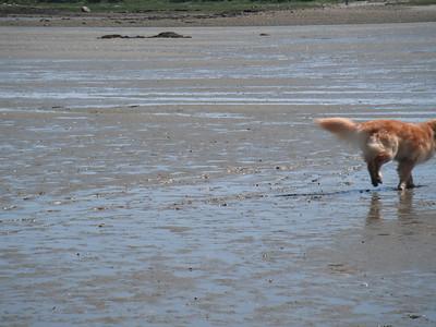 July 4th 2010 - Mud Walk