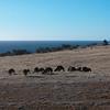 Kangaroos grazing on our doorstep