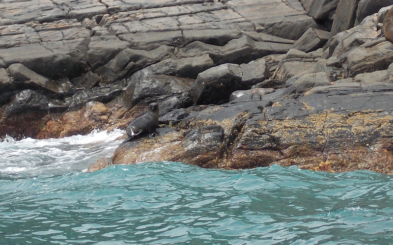 We also came across some seals playing on the rocks