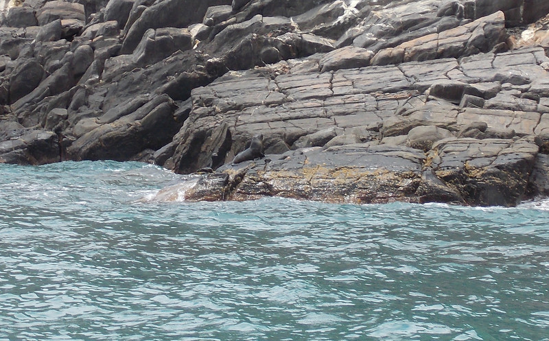 They are New Zealand Fur Seals which can also been seen at Admirals arch on the other side of the island