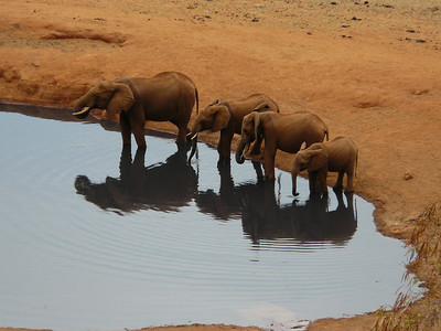 Elephants drinking at a watering hole in Tsavo, Kenya