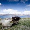 Death at Pangong Tso.