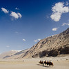 Camel riding at Nubra Valley.