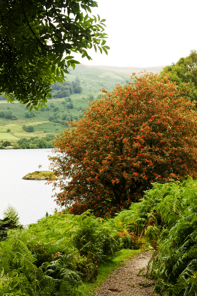 Ullswater - a red bush in a sea of green