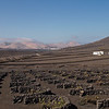 From Timanfaya, we headed to one of Southern Lanzarote's volcanic vinyards.