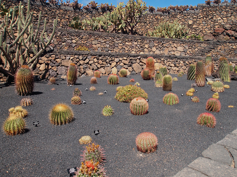 And lots of cacti, often arranged in a manner that makes them look even more alien than usual.