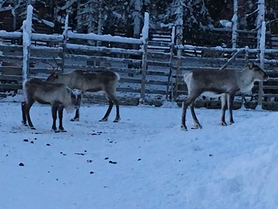 Lapland - December 2016