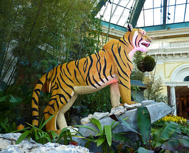 Tiger, The Bellagio Conservatory & Botanical Gardens