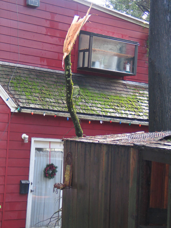New Years Eve day after the heavy rain storm. A branch or two fell from the tree above in front of our door.