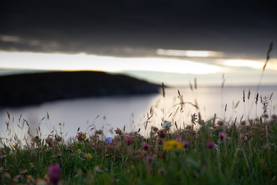 Flowers on the Machair and hills