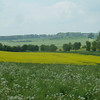 Late spring in the fields south of Duntisbourne Rouse.
