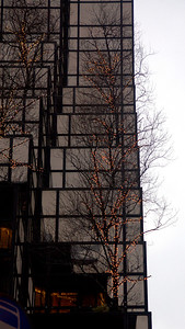 Lit up trees on a building along 5th Avenue