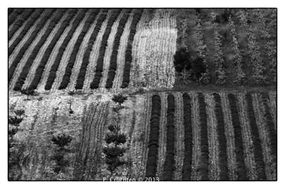 Lubéron fields near Lioux