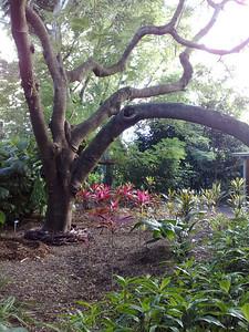 20090620_0915_499 Mackay Botanical Gardens
