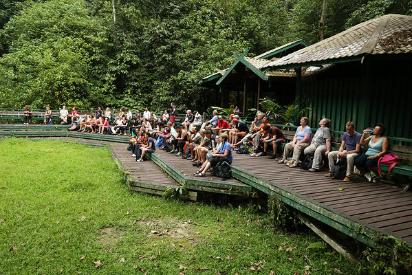 Almost daily the bats from Deer Cave come out in the evening to eat. People are gathering to wait for them.