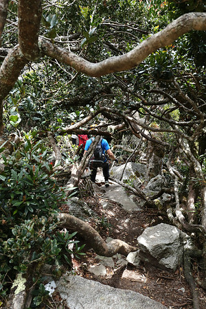 The trail has a section of about 300 meters through the woods.