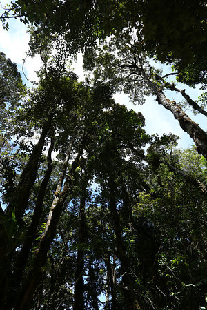 There are trees up to high altitude, around 3000 meters.