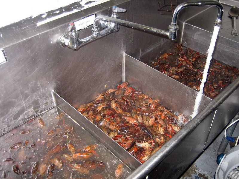90 lbs. of live crawfish