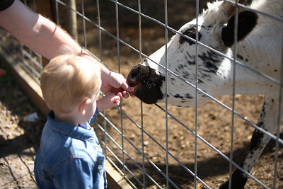 Daddy, will you help me feed the cow?