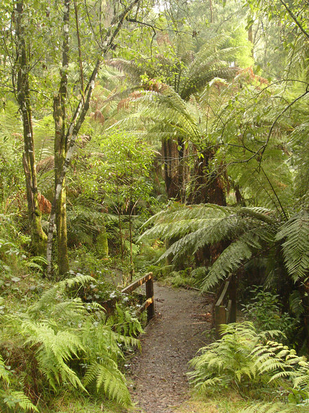 20060716_2165 Beauty Spot walking track, Marysville. There are many walking tracks around Marysville.