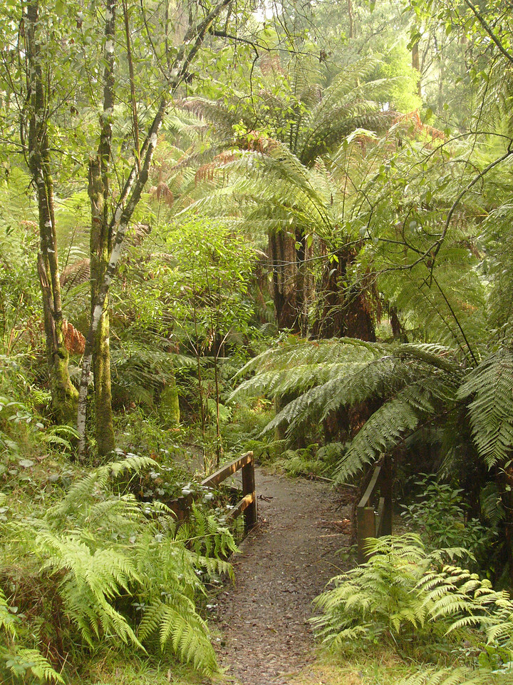 20060716_2165 Beauty Spot walking track, Marysville.