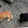 The shrine also has a resident feral cat community...cat friends are everywhere!