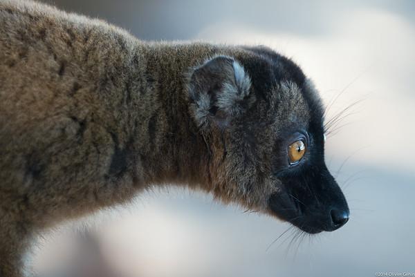 Mayotte 2014