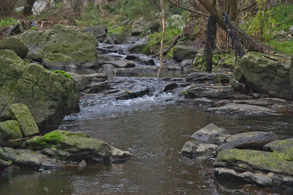 20080609_1602 Darebin River, between Darebin Park and Seddon Reserve
