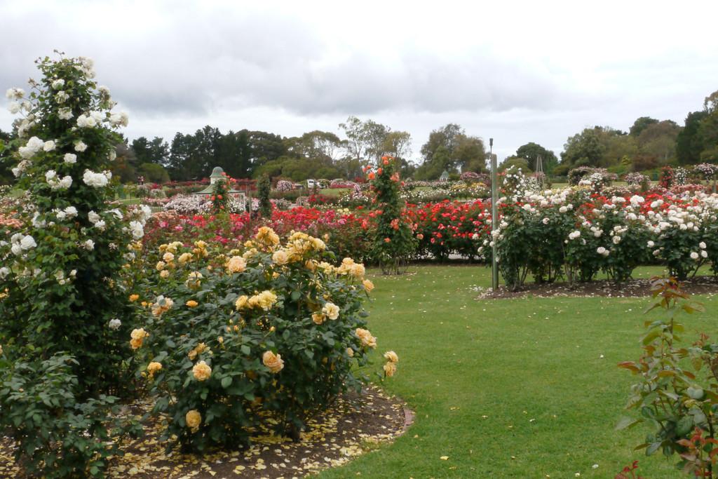 20121117_0948_4781 Werribee Rose Garden