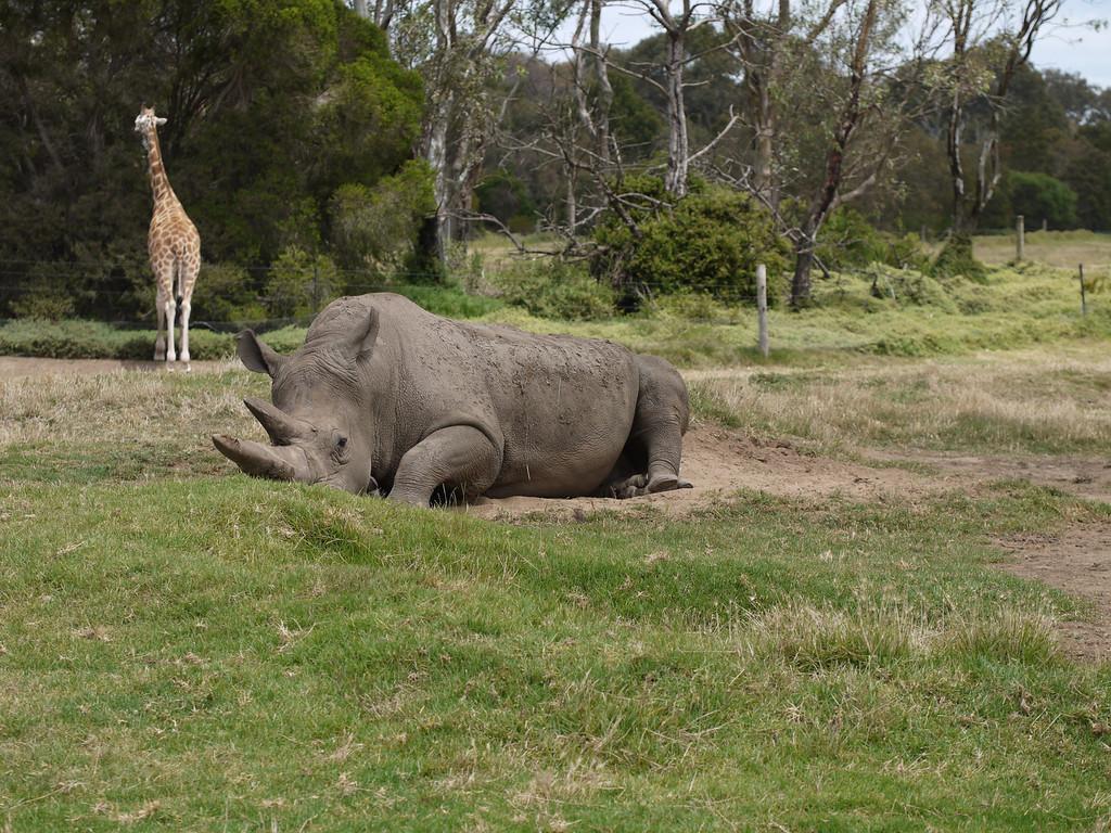 20131227_1311_1274 Werribee Zoo