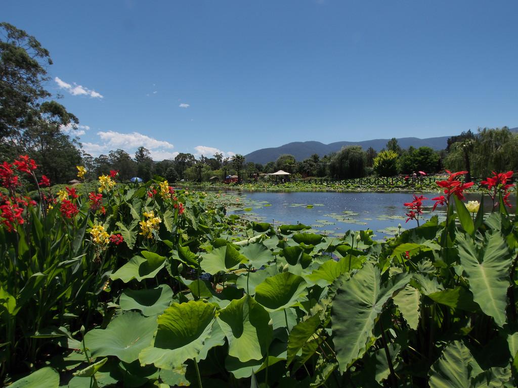 20131228_1216_0043 Blue Lotus Water Garden