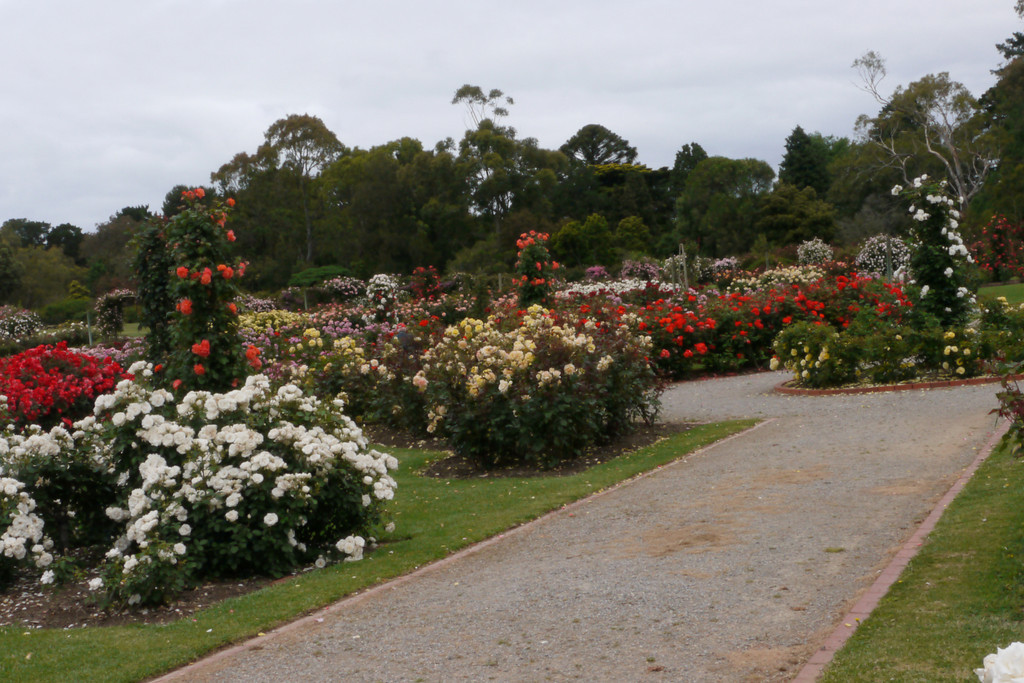 20121117_0951_4787 Werribee Rose Garden