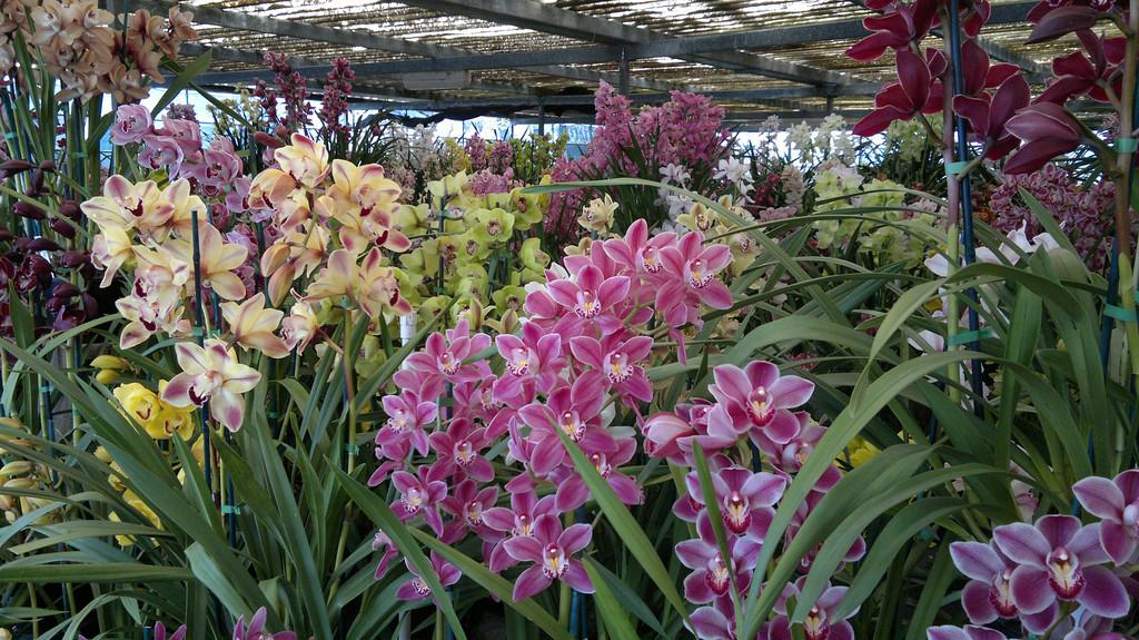 20120915_1249_094 Pioneer Orchid Farm, Geelong