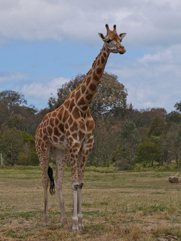 20131227_1310_1272 Werribee Zoo